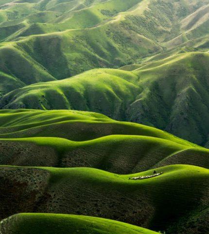 День Земли: 7 документальных фильмов о природе, которые должен увидеть каждый-430x480