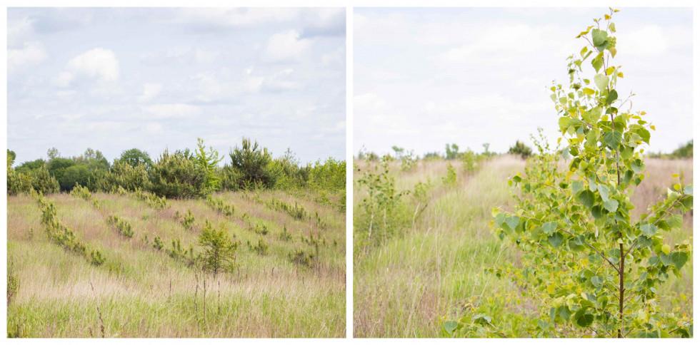 Фонд Yves Rocher висадив 100 000 дерев в Україні-Фото 3