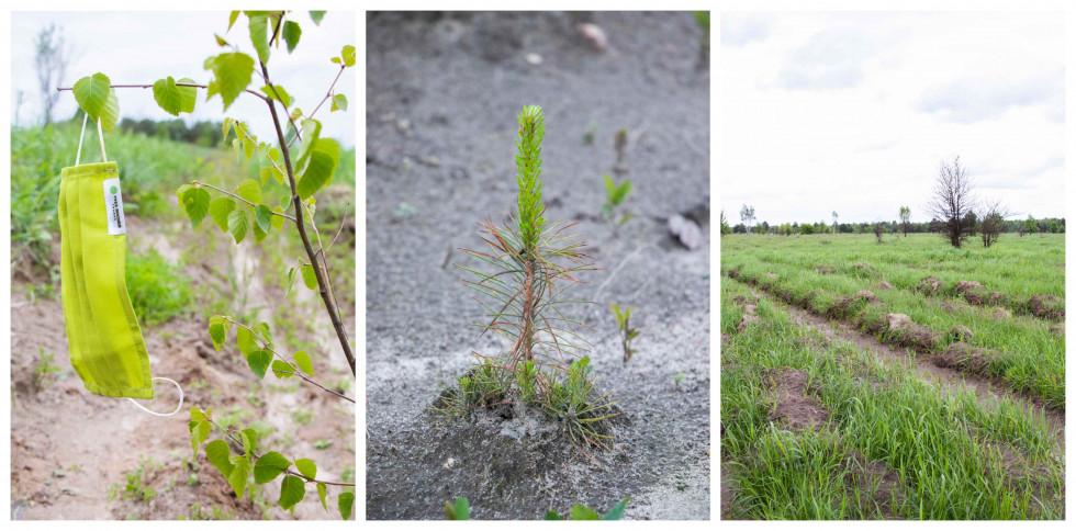 Фонд Yves Rocher висадив 100 000 дерев в Україні-Фото 2
