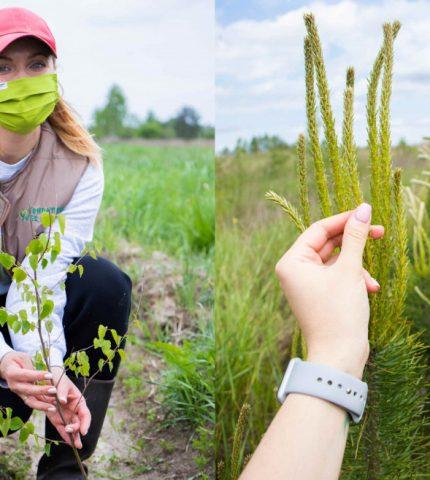 Фонд Yves Rocher висадив 100 000 дерев в Україні-430x480
