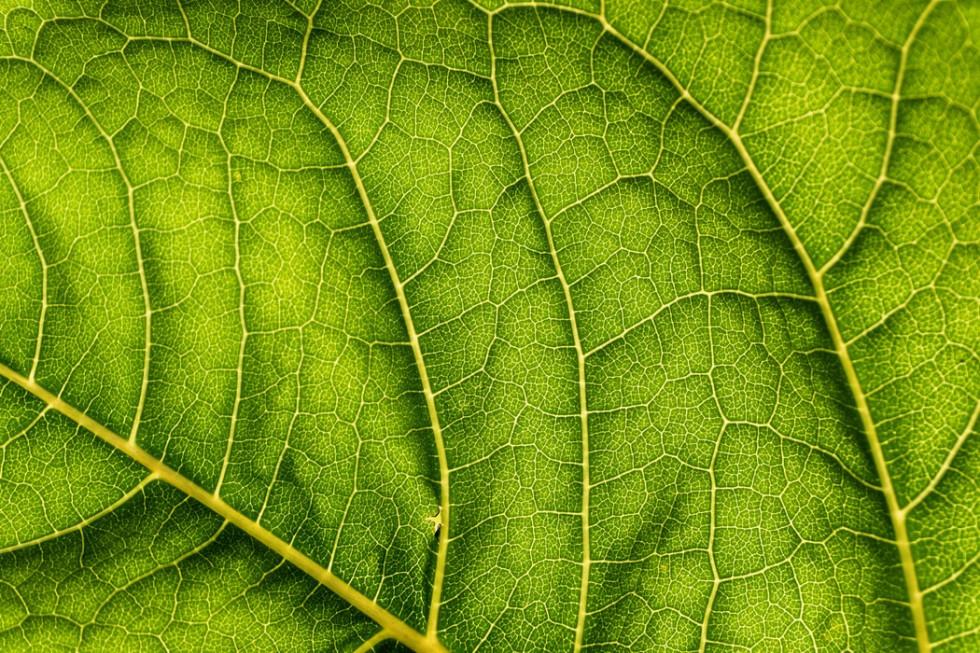 Sensitive skin chuvstvitelnaia kozha  956