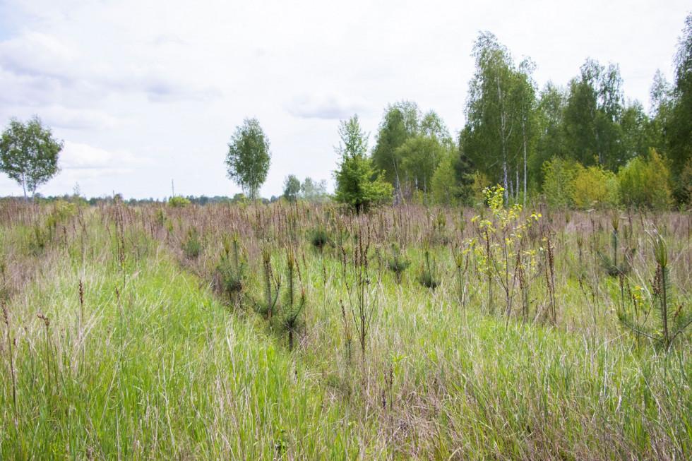 Фонд Yves Rocher висадив 100 000 дерев в Україні-Фото 4