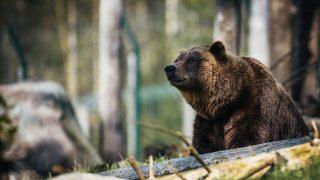 Понад 80% українців вважають браконьєрство неприйнятним та підтримують розширення заповідних територій-320x180
