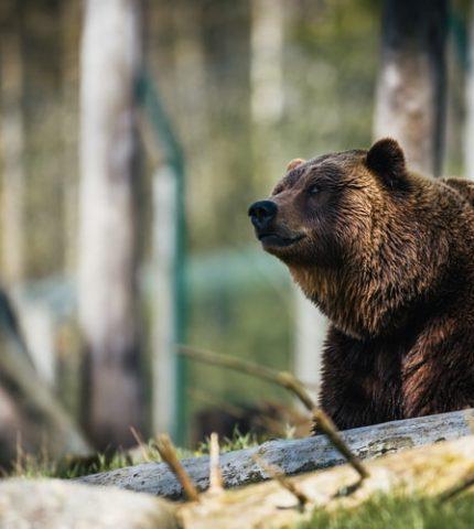 Понад 80% українців вважають браконьєрство неприйнятним та підтримують розширення заповідних територій-430x480