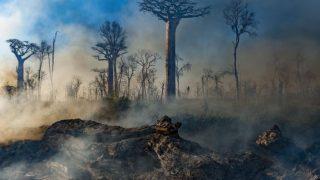 Подборка документальных фильмов про экологию от Анастасии Цыбуляк-320x180