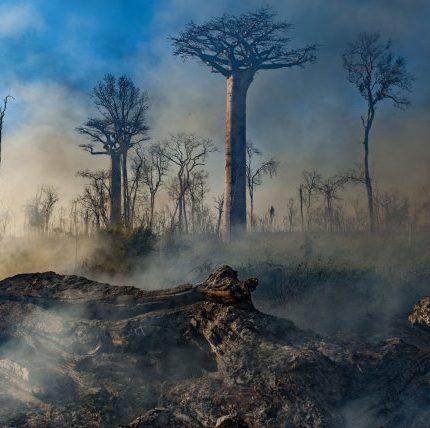 Подборка документальных фильмов про экологию от Анастасии Цыбуляк-430x480