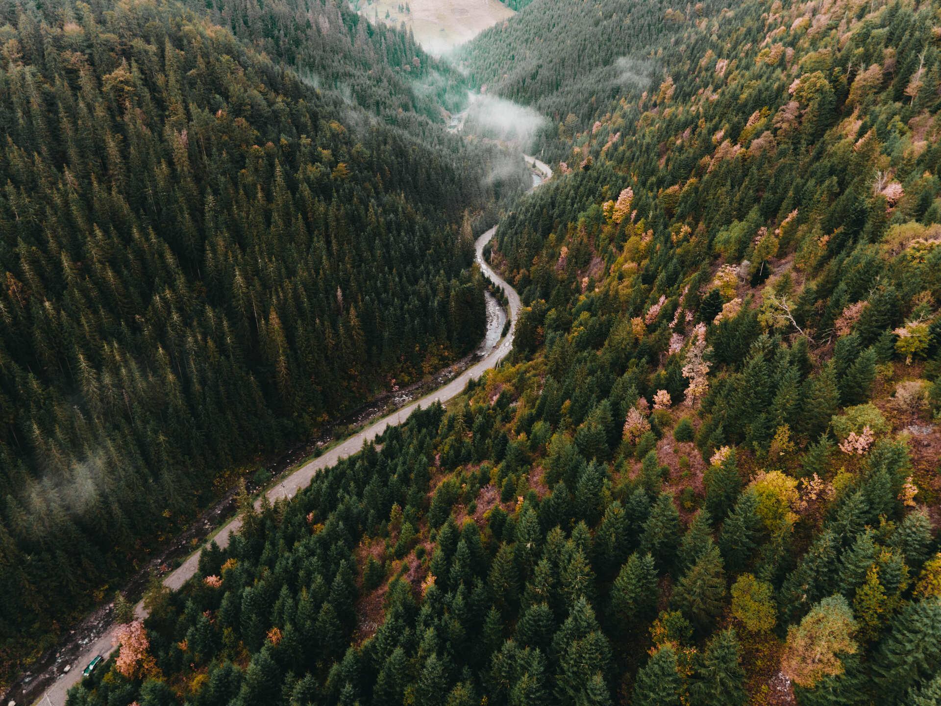 Дорога на полонину Апецька на околиці селища Дубове, що на Закарпатті. 1 листопада 2020 року. Фото: Харі Крішнан.