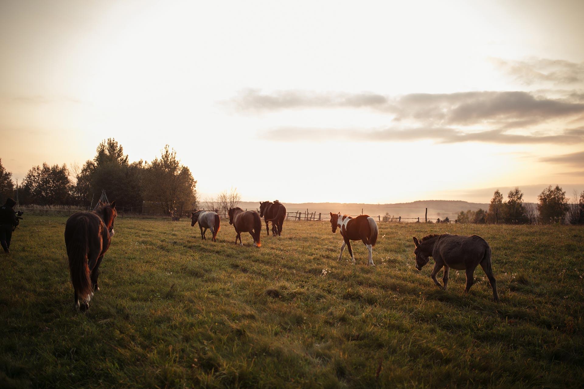 Об'їхати Америку і побудувати власне ранчо на Галичині-Фото 3