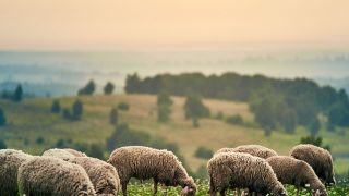 Полишити бізнес у Луцьку, щоб створити овечу ферму.  Історія садиби зеленого туризму «Хутір Касень»-320x180