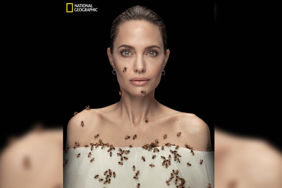 Королева улья: Во Всемирный день пчел Анджелина Джоли позирует в окружении насекомых-Фото 1