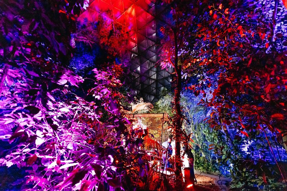 Три космические ночи в саду: Как прошли первые выходные лета-Фото 3