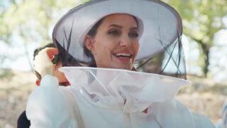 Анджелина Джоли спасает пасеки в Провансе в рамках программы ООН-320x180