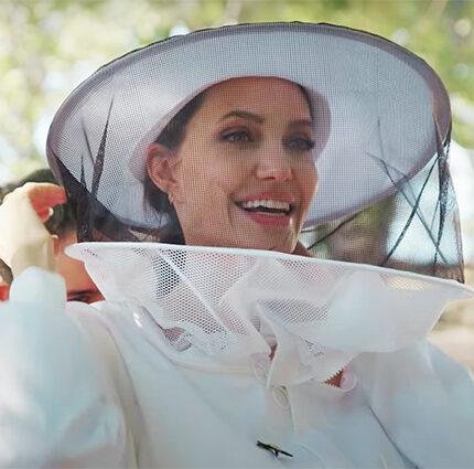 Анджелина Джоли спасает пасеки в Провансе в рамках программы ООН-430x480